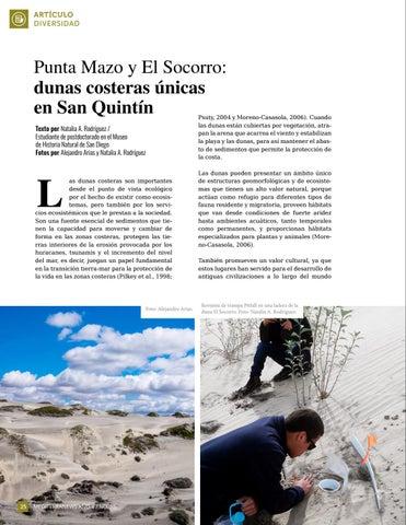 Page 26 of Punta Mazo y El Socorro: dunas costeras únicas en San Quintín