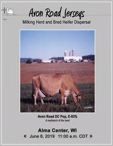 Avon Road Jerseys- Milking Herd and Bred Heifer Dispersal