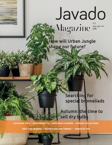 "greenhouse nursery outdoor cactus cacti 120 lot 6/"" new Azalea green plastic pot"