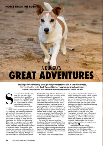 Page 58 of A Doggo's Great Adventures