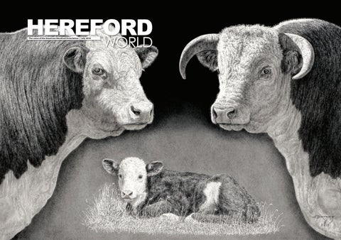American Hereford Hereford World American Hereford