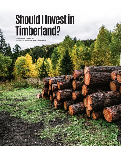 Page 42 of Should I invest in Timberland?