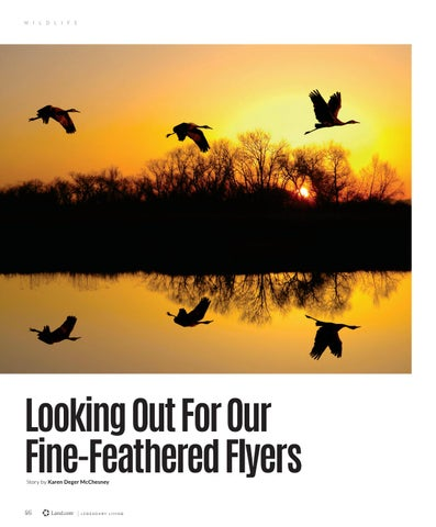 Page 50 of Looking out for our Fine-Feathered Flyers