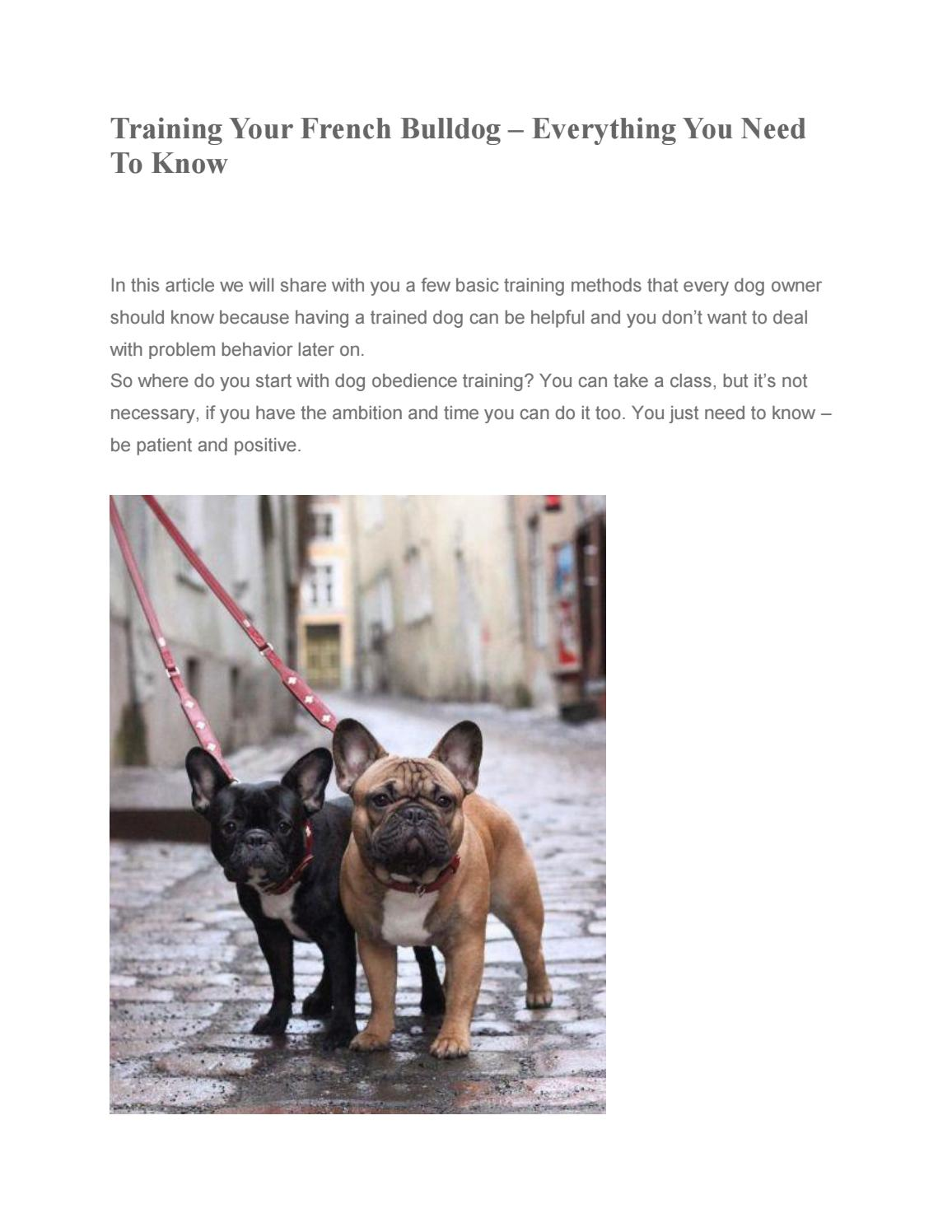 Training Your French Bulldog Everything You Need To Know By Frenchieholics French Bulldog Accessories French Bulldog Clothes French Bulldog Supplies Issuu