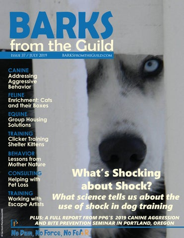 Page 1 of BARKS July 2019 Highlights