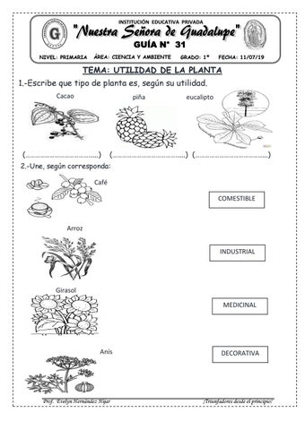 Utilidad De Las Plantas By Evelynabejitas Issuu