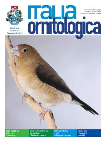 Calendario Mostre Ornitologiche 2019 Sicilia.Italia Ornitologica Giugno Luglio 2019 By Dinamoweb Issuu