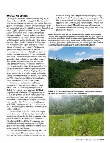Page 23 of Wetland Plant Evolutionary History Influences Soil and Endophyte Microbial Community Composition