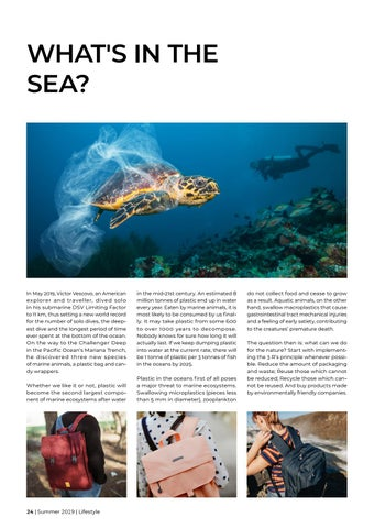 Page 24 of What's in the sea?