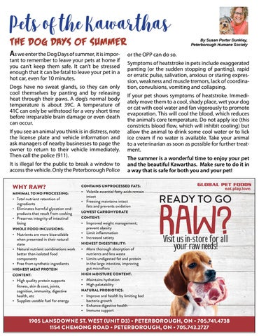 Page 42 of Pets of the Kawarthas