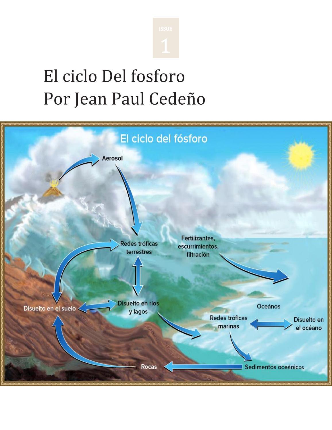 Ciclo Del Fósforo Jean Paul Cedeño By Jean Paul Issuu
