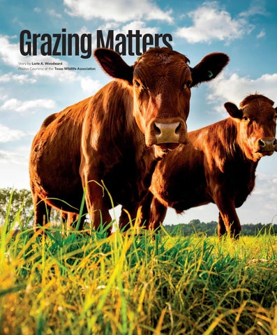 Page 54 of Grazing Matters