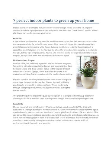 7 Perfect Indoor Plants To Green Up