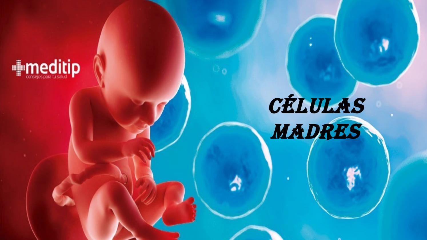 Células madre pluripotentes inducidas curan la diabetes