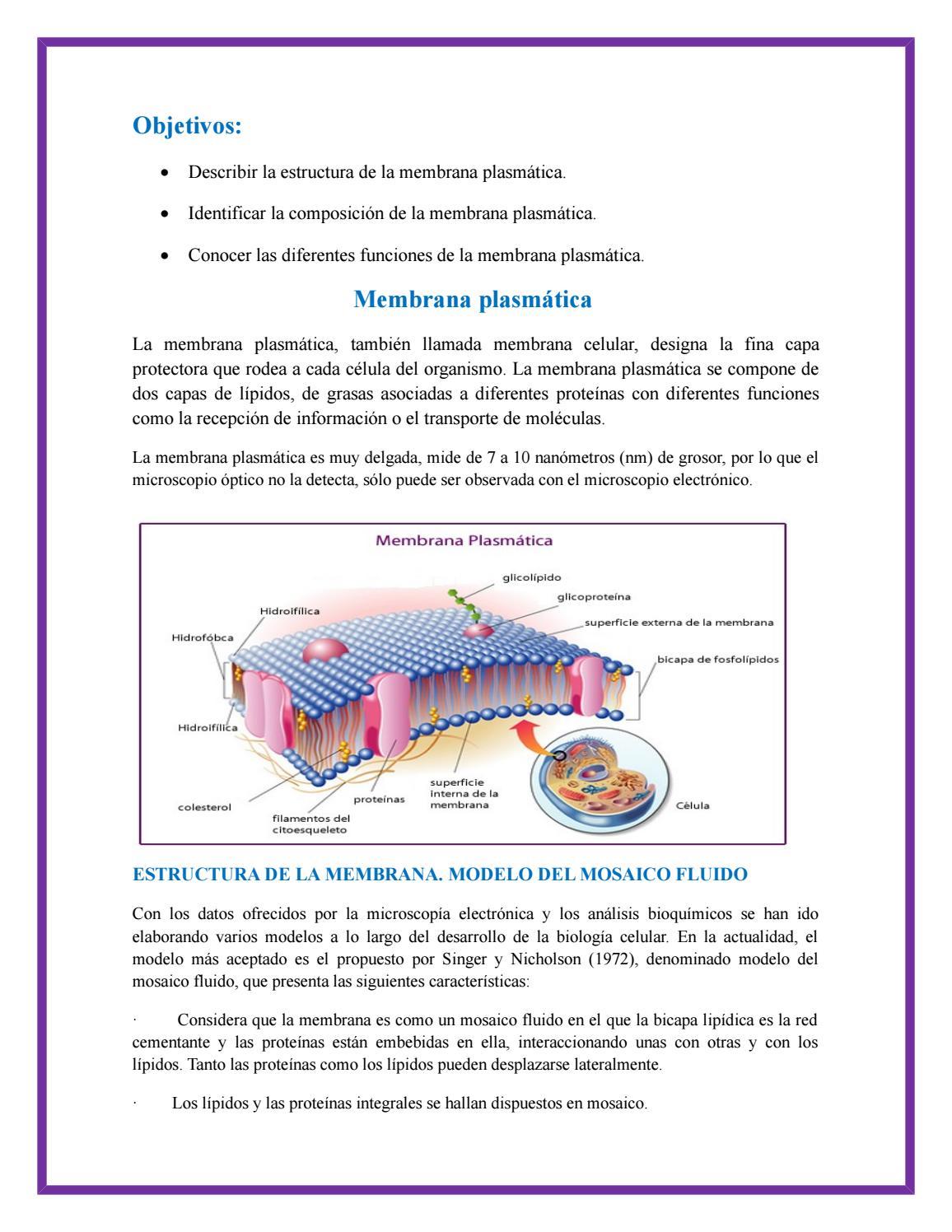 Membrana Plasmatica By Señor Enfermerock Issuu