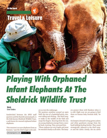 Page 38 of Playing with Orphaned Infant Elephants at the Sheldrick Wildlife Trust