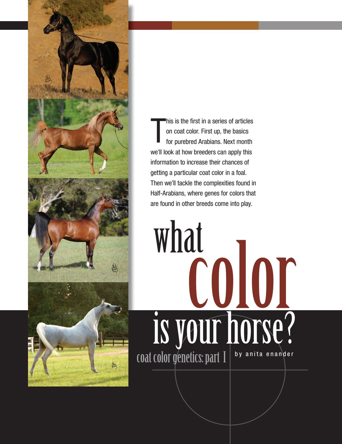 What Color Is Your Horse Part 1 By Arabian Horse World Issuu