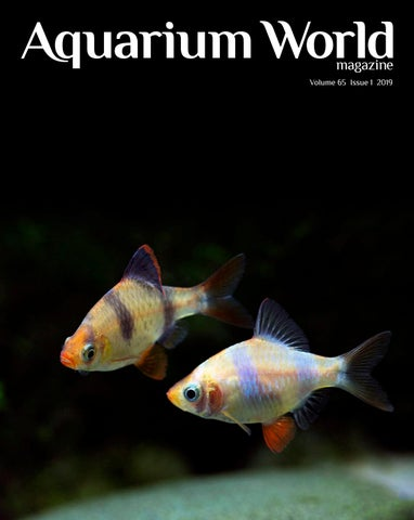 Page 1 of Aquarium World Magazine Volume 65 Issue 1 2019