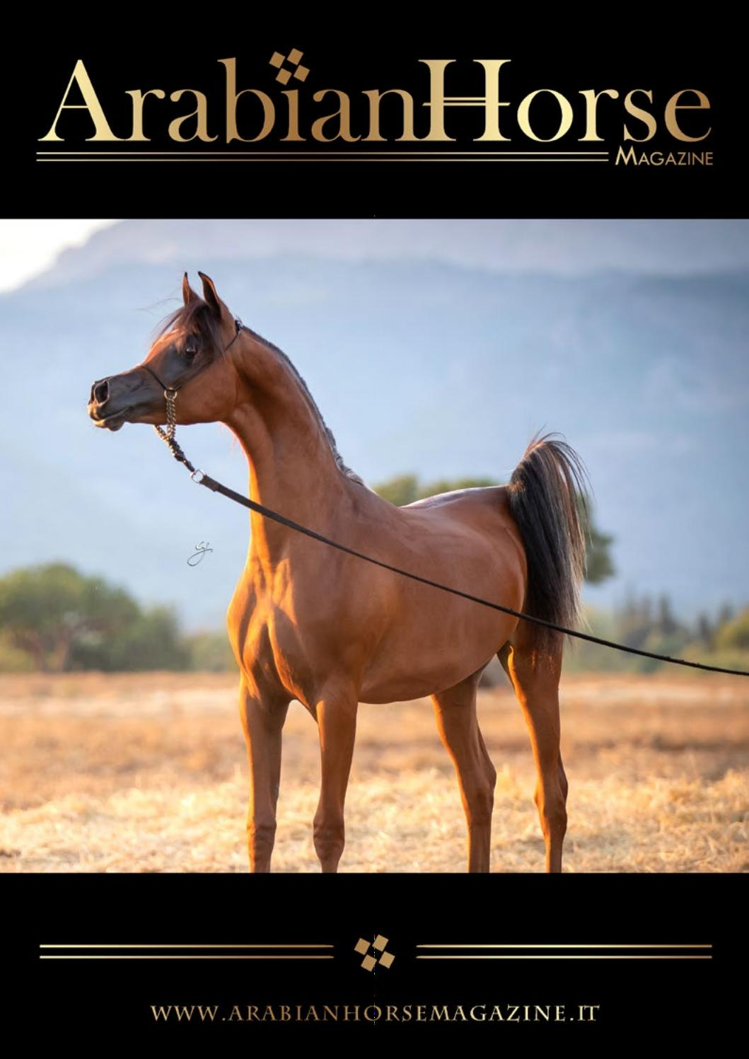 Arabian Horse Magazine N3 2019 By Arabian Horse Magazine Issuu