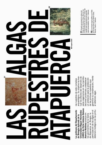 Page 16 of Las algas rupestres de Atapuerca
