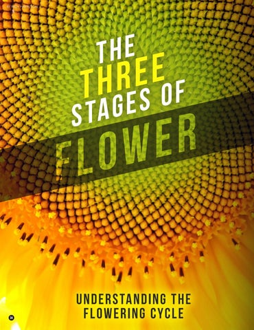 Page 34 of The Three Stages of Flower