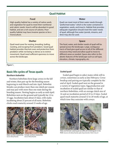Page 2 of Life Cycle and Habitat Requirements of Montezuma Quail