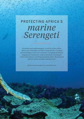 Page 31 of Protecting Africa's marine Serengeti