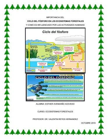 La Importancia Del Ciclo Del Fósforo En Los Ecosistemas Forestales By Sds Esther Issuu