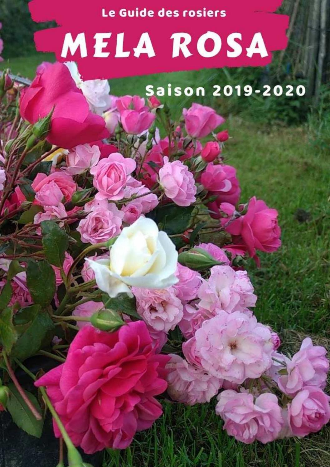 Couper Les Rosiers En Octobre catalogue rosiers melarosa 2019-2020mela rosa - issuu