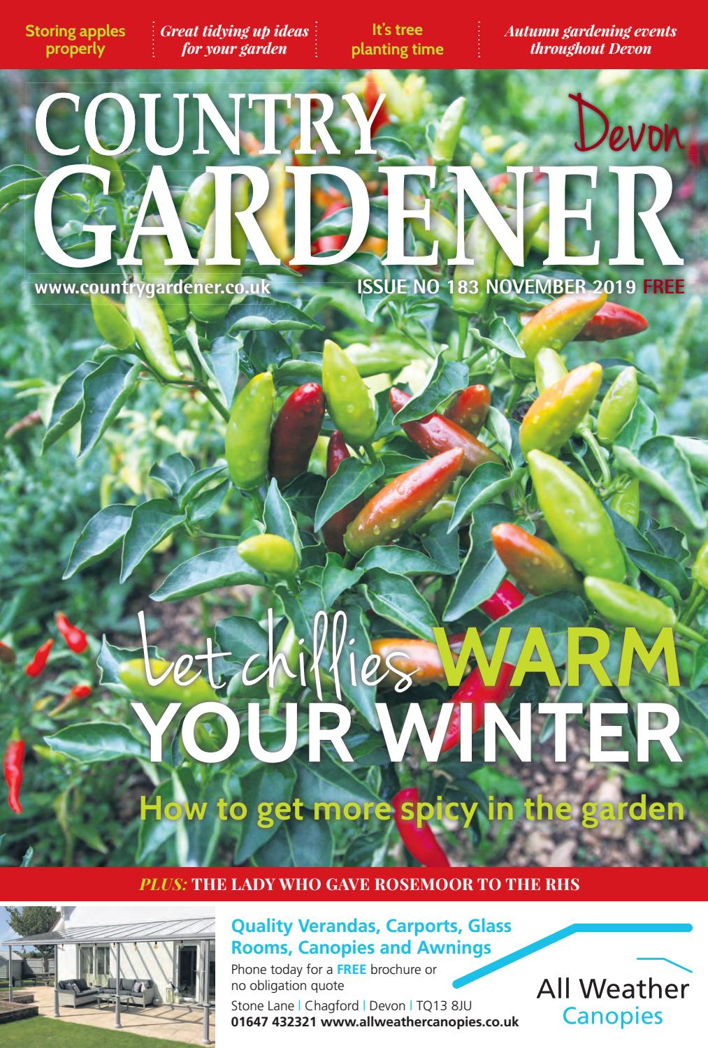 Organic Green Bell Pepper Seed Healthy Organic Vegetable and Garden Courtyard Sw