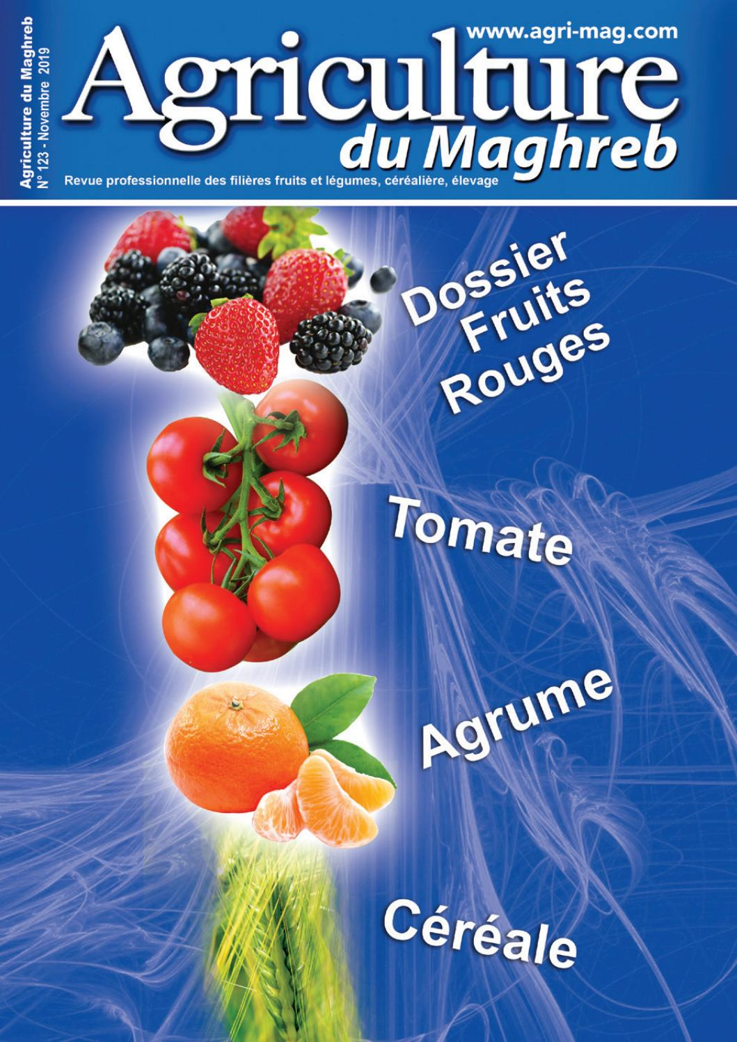 20 graines-Paquet économique Légumes-haricot grimpant-Lac Bleu