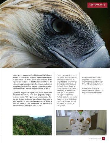 Page 25 of Alzando la vista: Bird of Prey