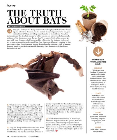 Page 78 of THE TRUTH ABOUT BATS