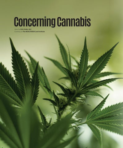 Page 44 of Concerning Cannabis
