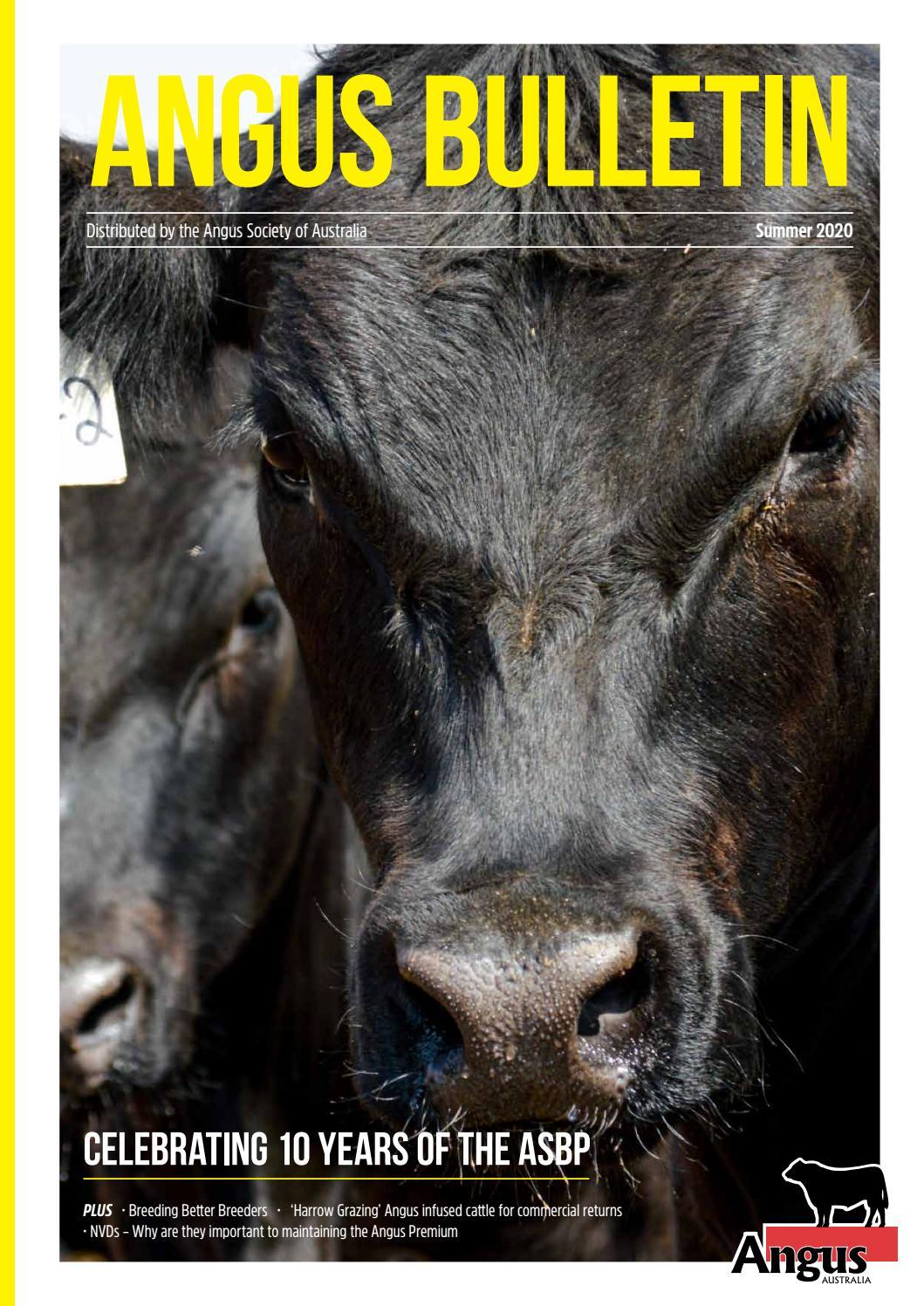 2020 Summer Angus Bulletin By Angus Australia Issuu