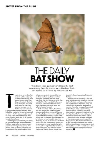 Page 24 of The Daily Bat Show