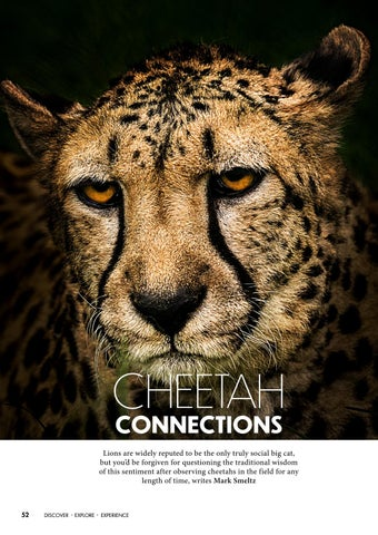 Page 52 of Cheetah Connections