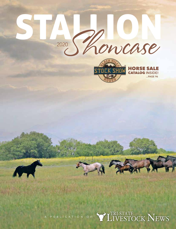 NEW RAY FARM ANIMAL SET = The HORSE RANCHER SET ACCESSORIES BONUS CATS