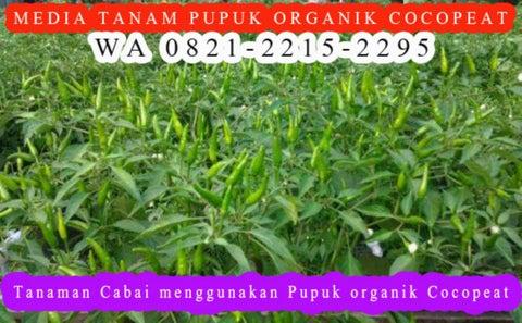 Page 2 of WA 0821-2215-2295, Jual  pupuk organik agar tanaman cepat berbuah