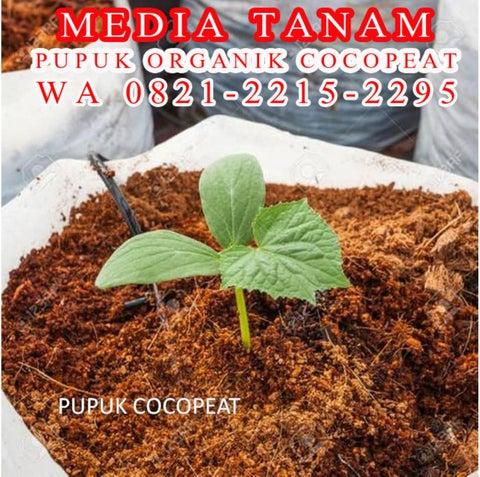Page 6 of WA 0821-2215-2295, Jual  pupuk organik agar tanaman cepat berbuah