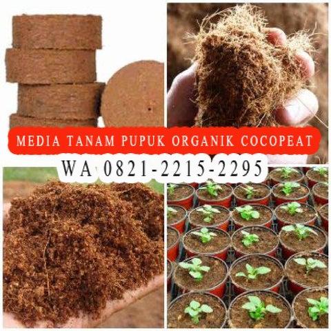 Page 7 of WA 0821-2215-2295, Jual  pupuk organik agar tanaman cepat berbuah
