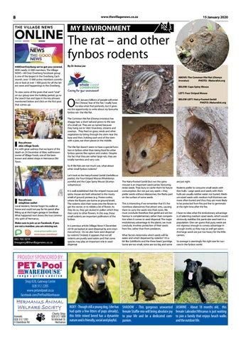 Page 8 of The rat – and other fynbos rodents
