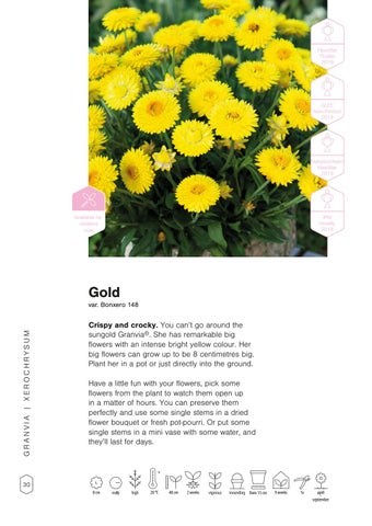 Page 32 of Granvia® Gold & Pink Flame
