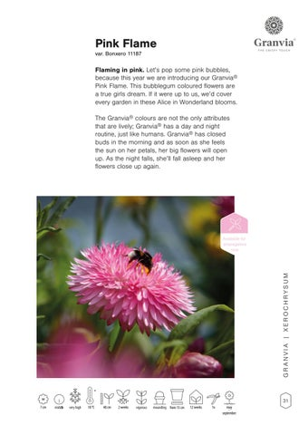 Page 33 of Granvia® Gold & Pink Flame