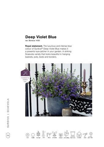 Page 58 of Surdiva® Deep Violet Blue