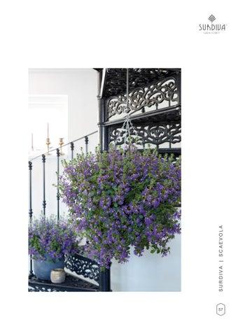 Page 59 of Surdiva® Deep Violet Blue