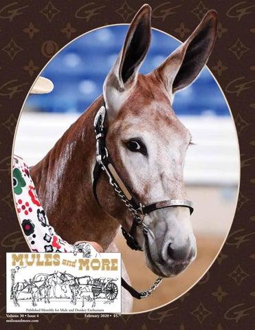 Team Draft Work Mule Horse Rodeo Western Car Truck Window Vinyl Decal Sticker