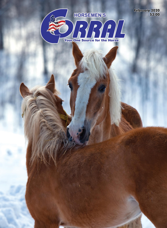 Perry Equestrian No.524 Standard Saddle Rack