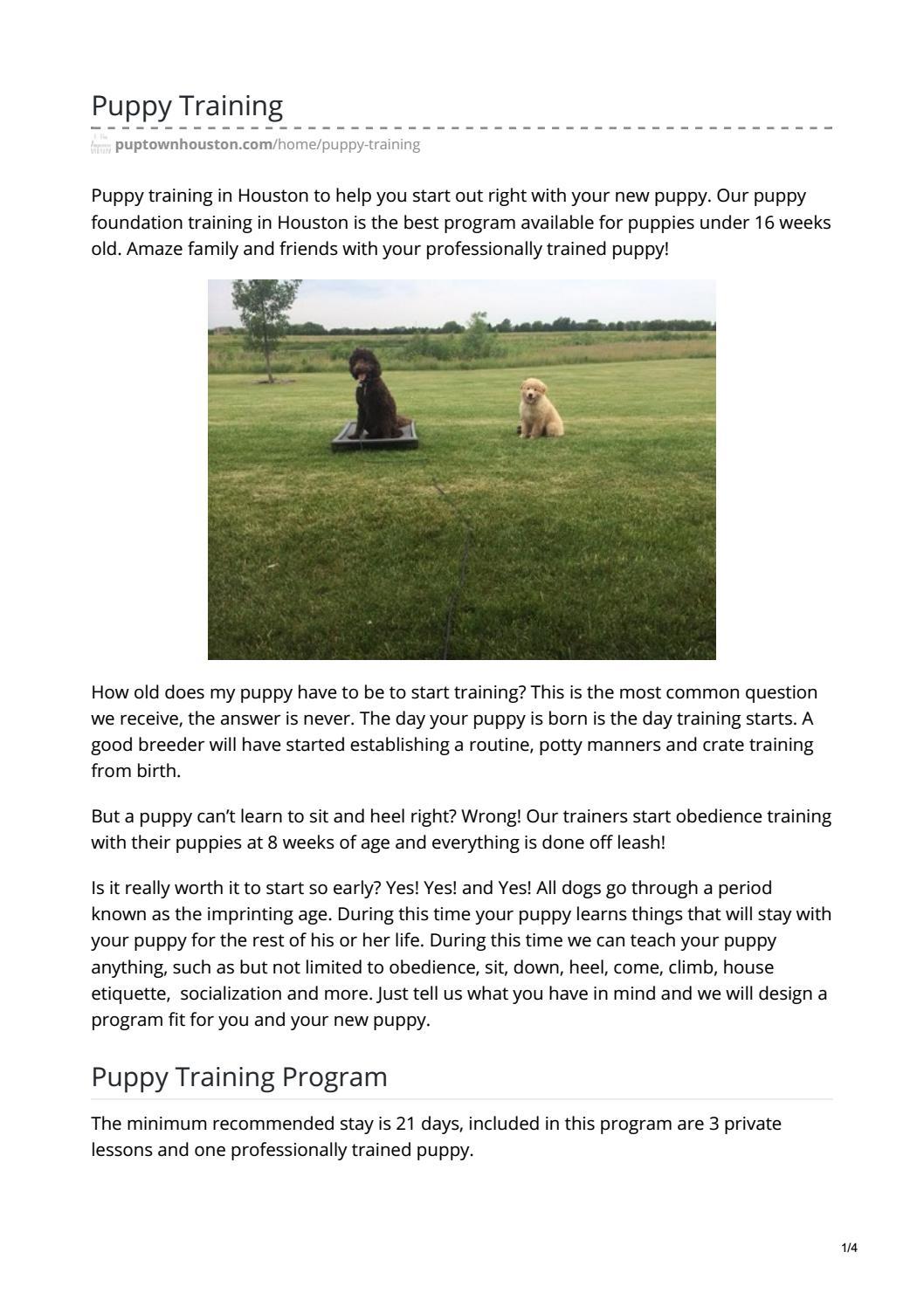 Dog Training In Houston By Barry Allen Issuu