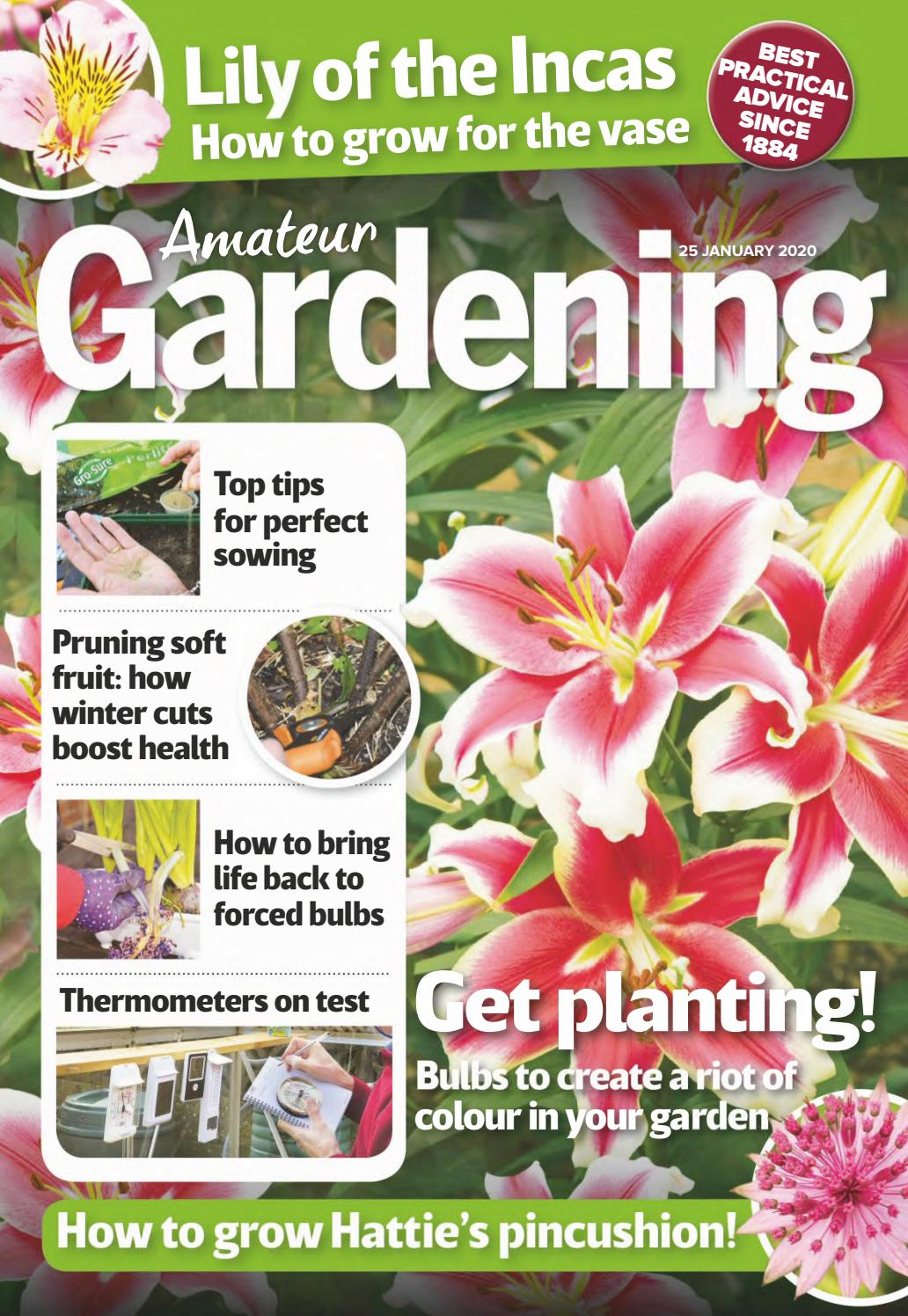 Epimedium davidii perennial plant ideal ground cover any aspect 9cm pot FREE DELIVERY